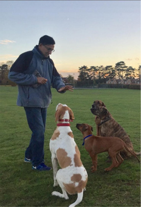 Dog Training in the park